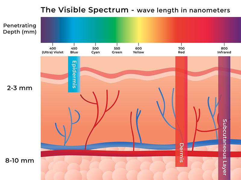 skin-penetration-chart